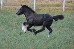 pferde-05