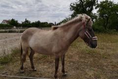 pferde-06