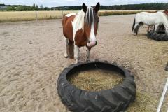 pferde-07
