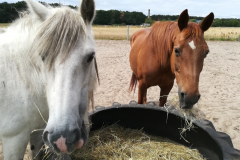 pferde-08