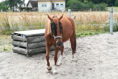 pferde-09