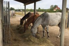 pferde-02